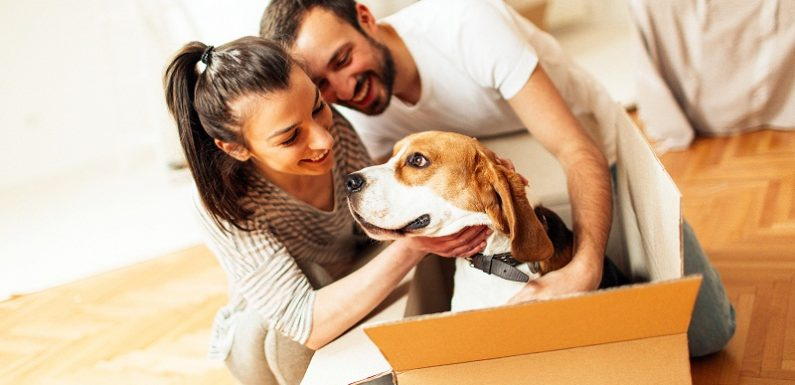 Moving with a pet to New Jersey