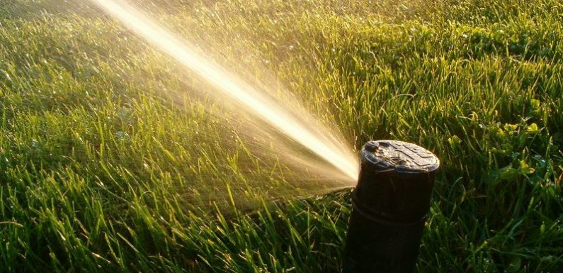 Water Your Lawn More Efficiently – 5 Tips from the Pros