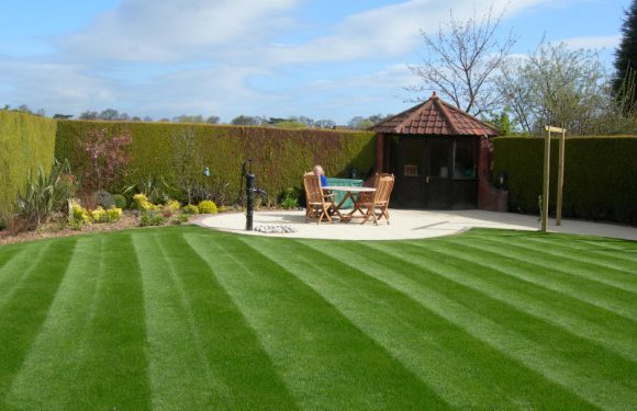 How to Prevent the Quick Buildup of Thick Thatch on Your Lawn